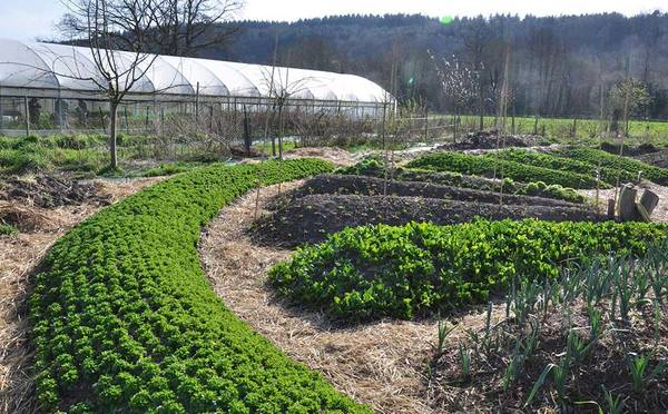 Permaculture Definition Fao
